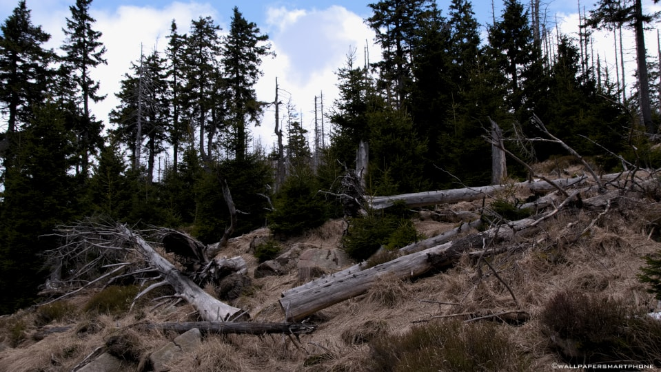 Brocken Harz Landschaft