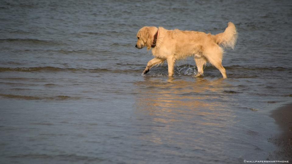 Ostsee Hund im Wasser
