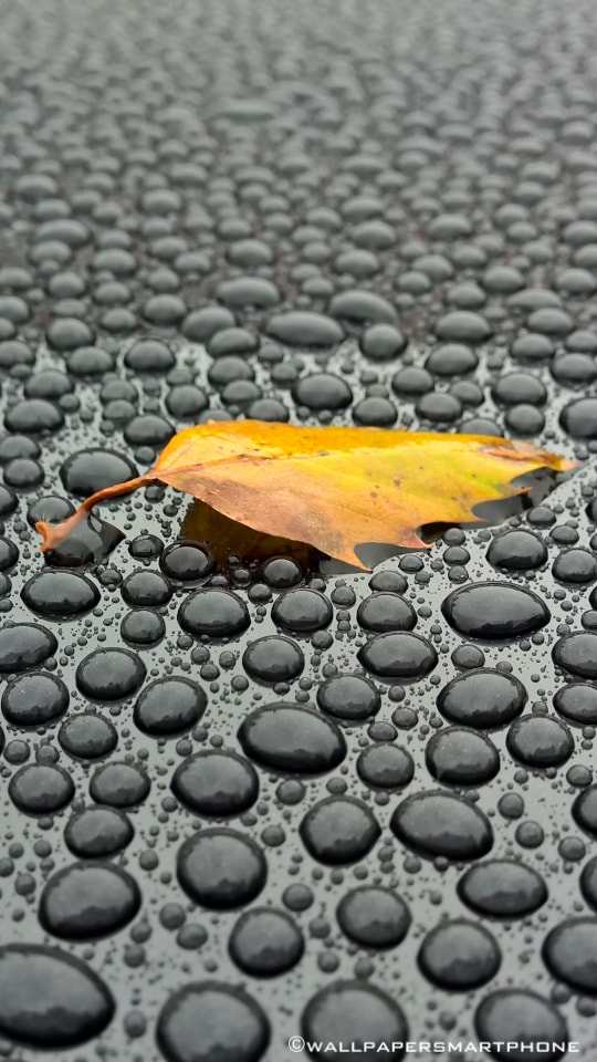 leaf and waterdrops on a car roof