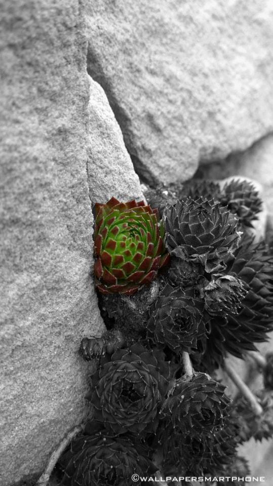 little plant between stones